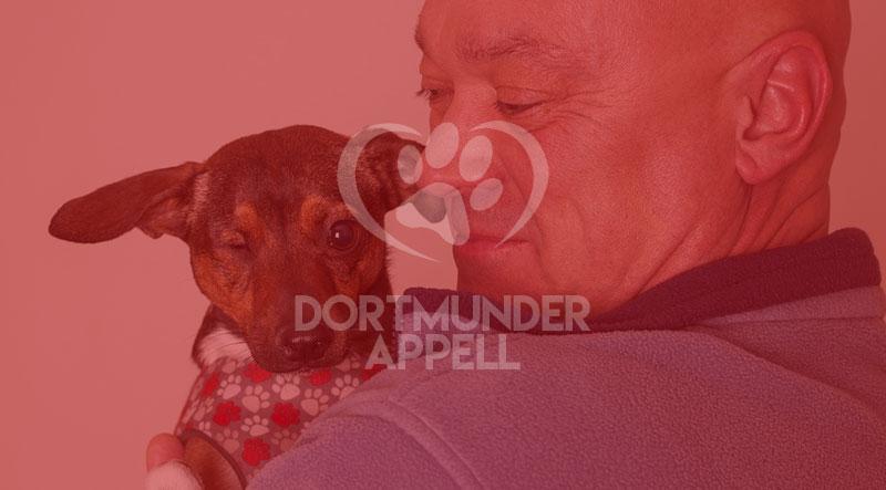Den Zyklus unterbrechen: Warum Sie in Betracht ziehen sollten, stattdessen einen Hund zu adoptieren?
