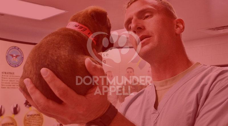 Ihr Partner für Gesundheit: Wichtige Fragen, die Sie dem Tierarzt Ihres Haustiers stellen müssen
