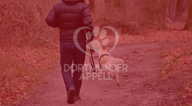 Drei kostenlose und kinderleichte Möglichkeiten, wie Sie Ihren Hund trainieren können.